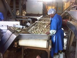 Veg processing South Africa